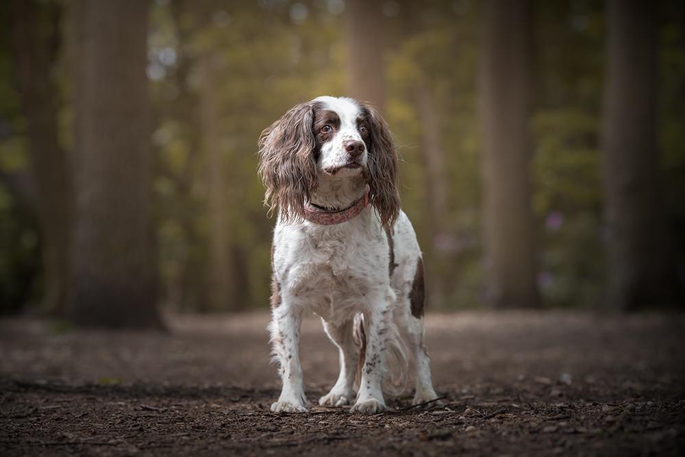 Dog Photographer | Dog Photography | Lincoln| David Lowerson Photography | Lincolnshire