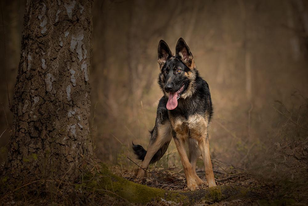 Dog Photographer | Lincoln| David Lowerson Photography | Lincolnshire