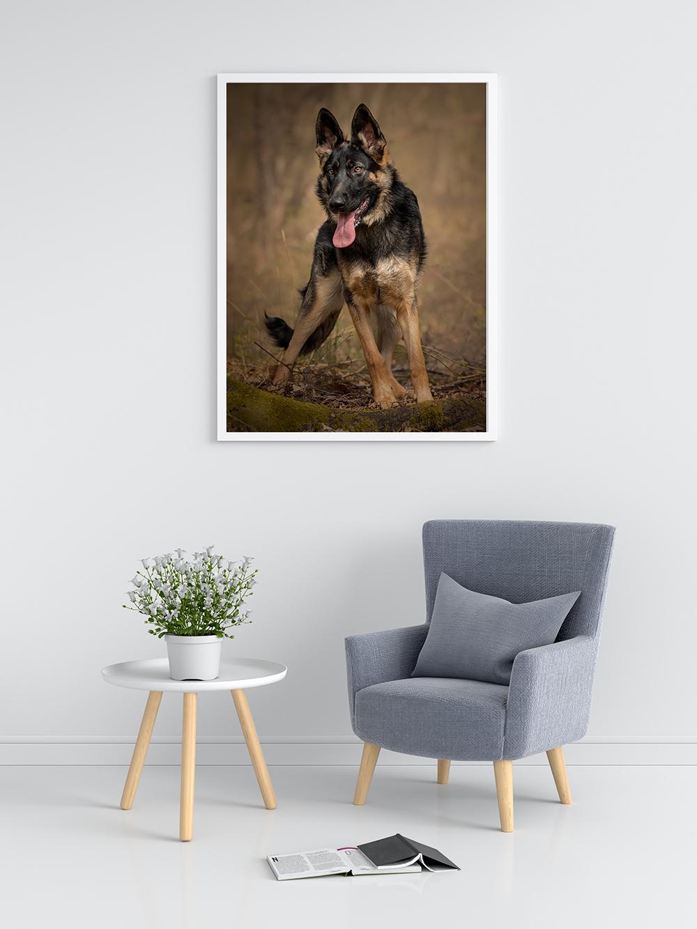 Contact David Lowerson Dog Photography